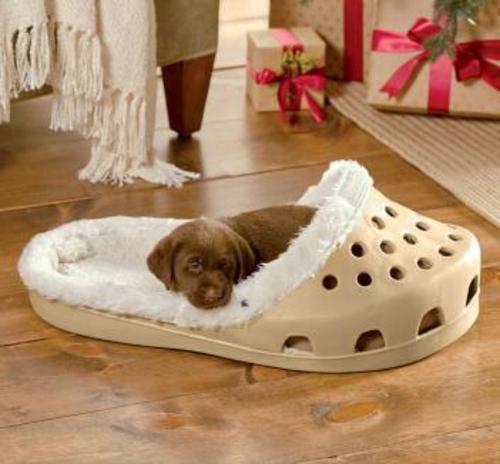 modelos-de-camas-para-cachorro-tipo-crocs