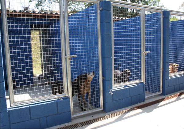 canil-para-cachorro-azulado