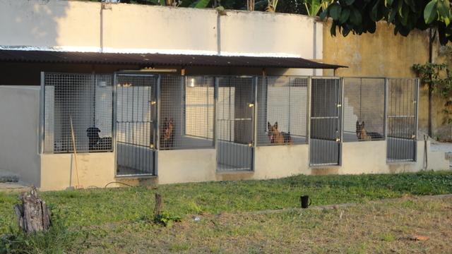 canil-para-cachorro-portão