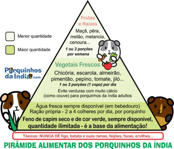 Piramide alimentar do porquinho da india