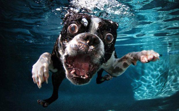 Cachorro pode tomar água da piscina?