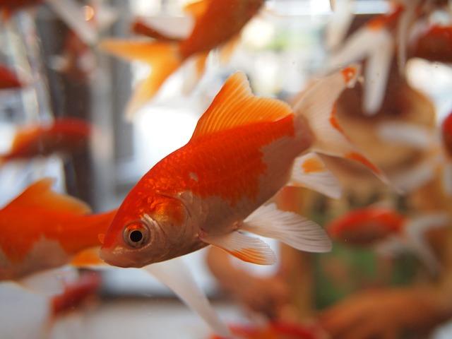 como limpar aquário corretamente