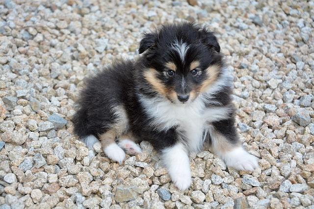 ração para cachorro filhote