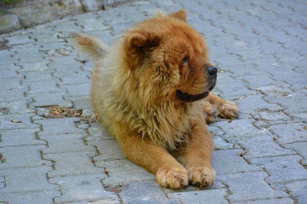 queda de pelo cachorro