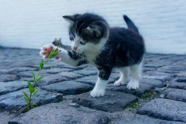 gato com pelo caindo