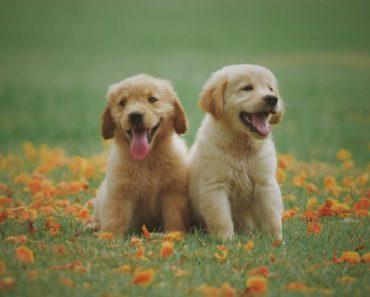 ração cães pequenos