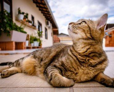 ração para gatos mais velhos