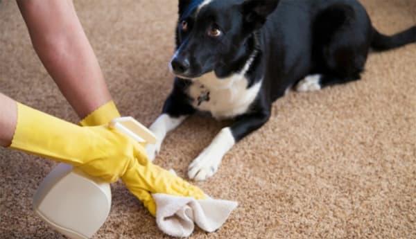 remover cheiro de xixi de cachorro do tapete