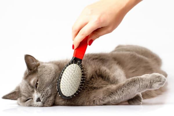 Dicas para diminuir queda de pelos do gato