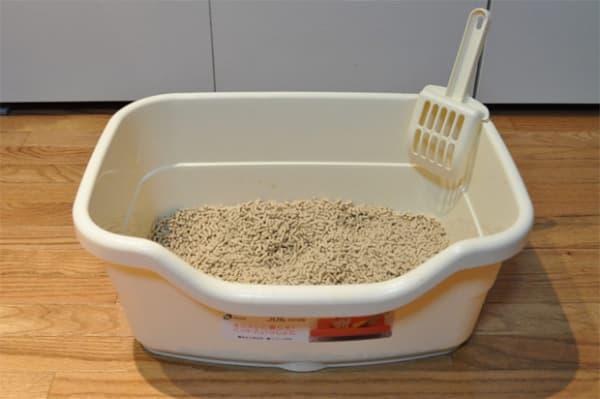 Passo a passo para limpar a areia do gato