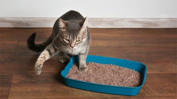 Qual a melhor areia para o gato