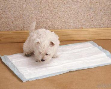 Tapete-sanitário-para-cães (1)