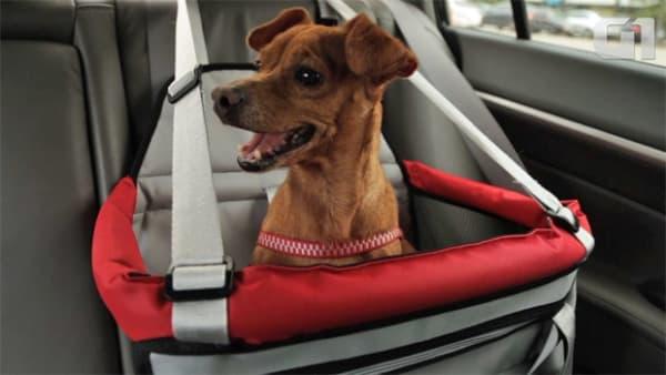 cadeira para transporte de cachorro