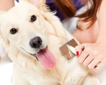 Dicas para evitar queda de pelo de cachorro