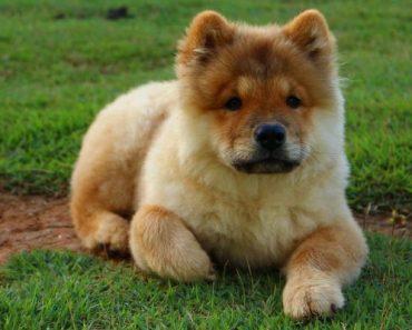 antipulgas para cães