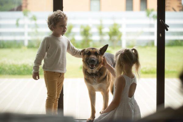imunização de cães