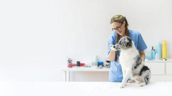 vacinas caninas
