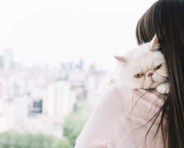 gato como vacinar