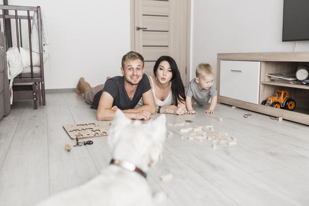 brinquedos para cachorro