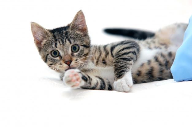 cortador de unha para gatos