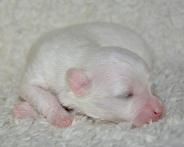 como cuidar de cachorrinho recém nascido