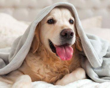 cachorro limpo